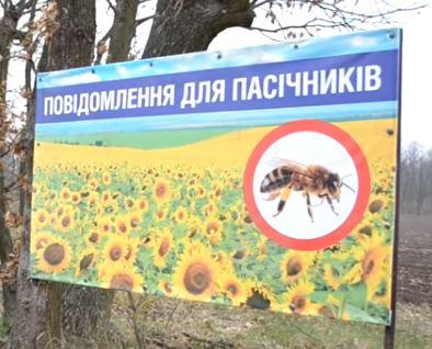 Пасечники Украины потребовали наказать фермеров из-за которых гибнут пчелы