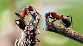 Муравьи на пасеке: или как бороться с муравьями на пасеке?