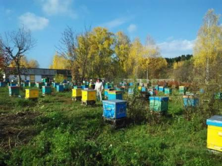 Как превратить пчеловодство Молдовы из хобби в прибыльный бизнес