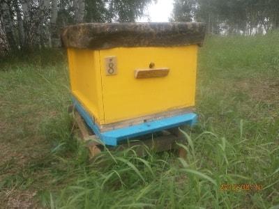 Дешевый улей  - как обеспечить пчеловодов дешевым и качественным ульем